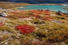 Заводы гористой местности осени в Норвегии Gamle Strynefjellsvegen Стоковые Фотографии RF