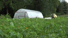 Заводы заботы женщины фермера в саде около парника 4K видеоматериал