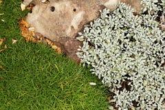Заводы земной крышки - maritima Armeria и ag тысячелистника обыкновенного (Achilleio) стоковое фото