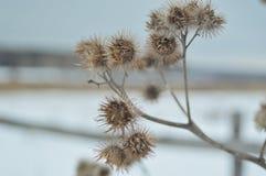 Заводы зимы Стоковые Фото