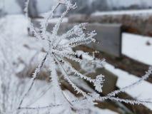 Заводы зимы Стоковые Изображения