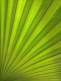 Заводы лист в саде Стоковое фото RF
