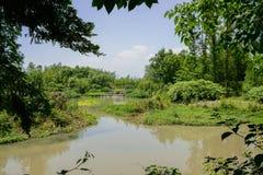 Заводы и деревья берега зелёные в солнечном лете Стоковое фото RF