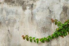 Заводы и каменная стена Стоковые Изображения RF