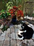 Заводы и коты Стоковые Изображения