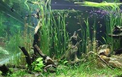 Заводы и рыбы в аквариуме Стоковое фото RF