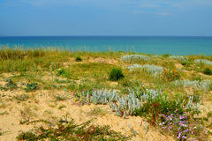 Заводы и цветки на естественных песчанных дюнах (Lanzada, Галиции, Испании) Стоковая Фотография RF