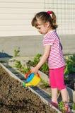 Заводы маленькой девочки моча от моча чонсервной банкы Стоковое Фото