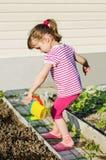 Заводы маленькой девочки моча от моча чонсервной банкы Стоковые Фото
