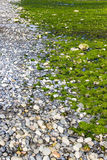 Заводы моря скалистого берега дневные стоковое фото