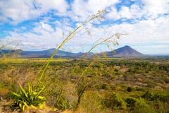 Заводы на предпосылке гор в Маврикии стоковое изображение
