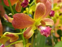 Заводы орхидеи орнаментальные Стоковая Фотография RF