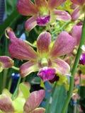 Заводы орхидеи орнаментальные Стоковые Изображения