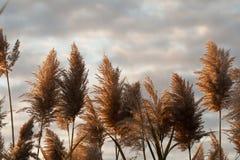 Заводы против неба Стоковое фото RF