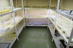 Заводы размножения редкие Стоковая Фотография