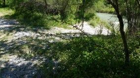 Заводы реки Стоковое Фото