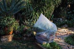 Заводы сада защищенные против заморозка Стоковое Изображение