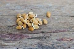 Заводы семян на oldwood Стоковая Фотография