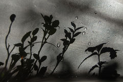 Заводы тени на ткани Стоковые Изображения