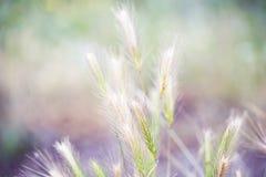 Заводы луга, колоски Стоковое Фото
