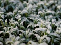 Заводы льда Стоковое Фото