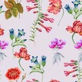 заводы phloxes сада цветков предпосылки картина безшовная Стоковая Фотография RF