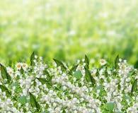заводы phloxes сада цветков предпосылки Стоковое фото RF
