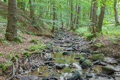 Заводь в лесе маленьких прикарпатских холмов Стоковое фото RF