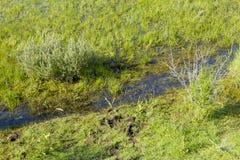 Заводь в зеленом голландском поле Стоковые Фотографии RF
