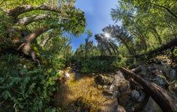Заводь в искажении широкоформатной панорамы fairy леса приполюсном Стоковая Фотография RF