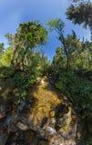 Заводь в искажении широкоформатной панорамы fairy леса приполюсном Стоковые Фото