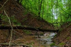 Заводь леса в промоине Стоковые Фотографии RF