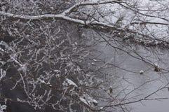 Заводь зимы Стоковые Изображения RF