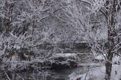 Заводь зимы Стоковое фото RF