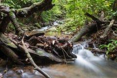 Заводь и упаденное дерево, длинное exposer стоковое фото
