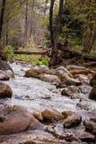 Заводь каньона в дожде Стоковые Изображения RF