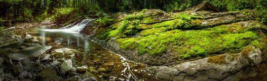 Заводь, мох и утесы Стоковое фото RF