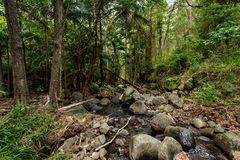 Заводь 3 тропического леса стоковое фото