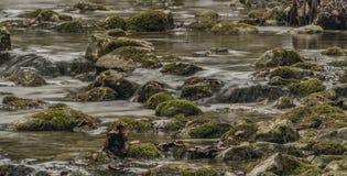 Заводь Biely с камнями и чистой водой Стоковое фото RF