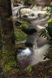 Заводь Newell в Тасмании Стоковые Фотографии RF