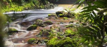 Заводь Newell в Тасмании Стоковые Изображения RF