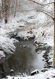 Заводь Snowy Стоковая Фотография RF