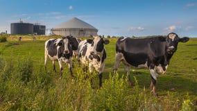 Завод лэндфилл-газа с коровами на ферме стоковое фото