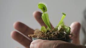 Завод flytrap Венера акции видеоматериалы