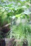завод potted Стоковое фото RF