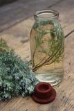 Завод Sprig в стеклянной бутылке Стоковое Фото