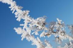 завтраки-обеды покрыли снежок стоковое фото