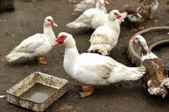 Завтрак на ферме Стоковые Фото