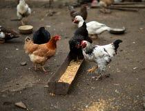 Завтрак на ферме Стоковое Изображение