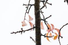 Завтрак-обед вишни и оставаясь листья в осени 5 Стоковая Фотография